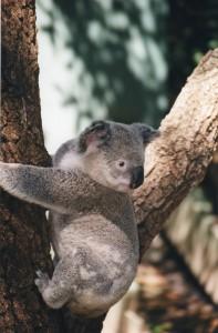 Australia 2000 - 013
