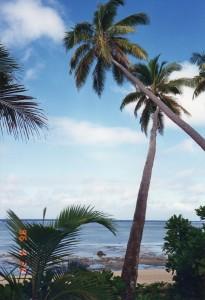 Fiji005