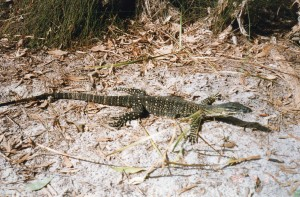 Fraser Island019